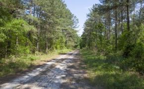 168 Acres on Grimes Road 4.jpg