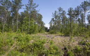 168 Acres on Grimes Road 9.jpg