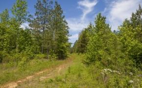 130 Acres near Littleton 1.jpg