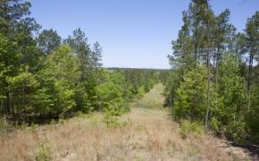 Harnett County 12.jpg