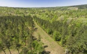 Harnett County 154 Acres_1.jpg