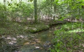 Harnett County 28.jpg