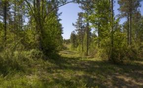Harnett County 3.jpg