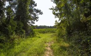 Hicks-Road-1