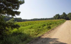 Hicks-Road-4