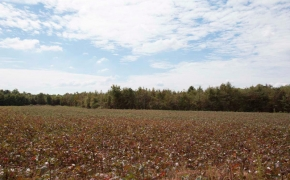 field11