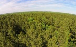 Kerney Land for Sale