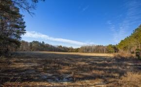 Field 11