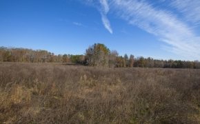 Fields 19