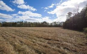 Fields 21