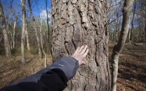 Timber 13