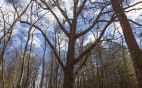 Timber 14