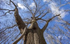 Timber 15
