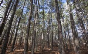 Timber 6