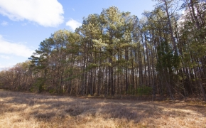 Timber 7
