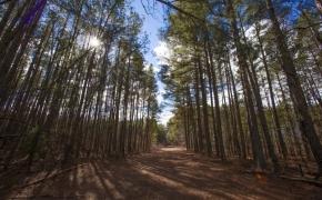 Timber 8