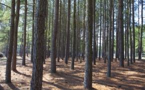 wooded-side-yard