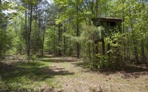 mays-chapel-rd-farm-33
