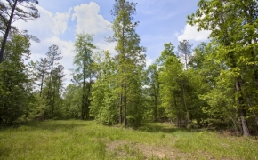norwood-forest-11