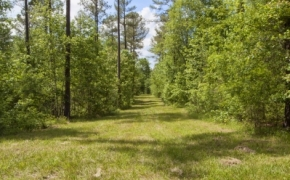 norwood-forest-12