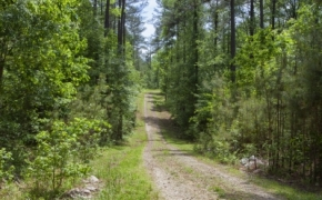 norwood-forest-14