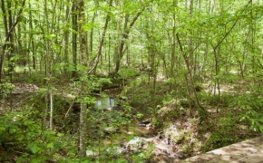 norwood-forest-19