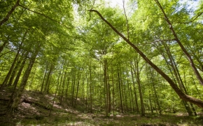 norwood-forest-6