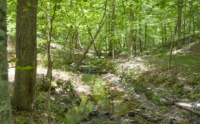 norwood-forest-7