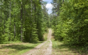 norwood-forest-8