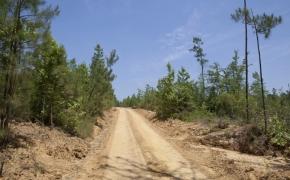 Partian Road 5