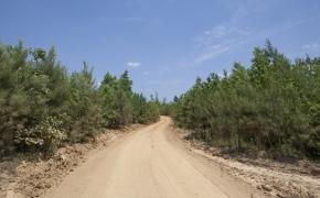 Partian Road 6