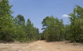Partian Road 8