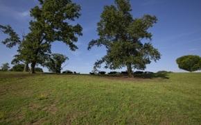Patterson-Farm-Grounds-13