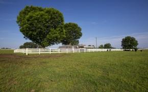 Patterson-Farm-Grounds-15