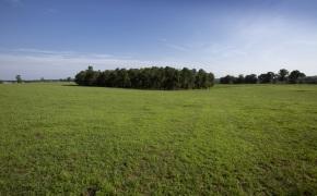 Patterson-Farm-Grounds-22