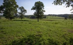 Patterson-Farm-Grounds-24