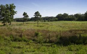 Patterson-Farm-Grounds-31