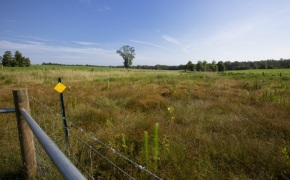 Patterson-Farm-Grounds-32