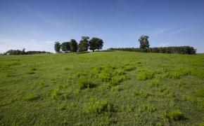 Patterson-Farm-Grounds-33