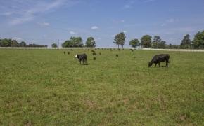 Patterson-Farm-Grounds-48