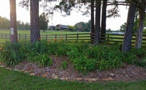 Entrance Garden #1