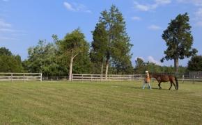 Guildford Horse Farm 2