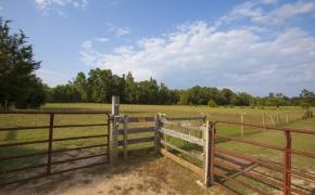 Guildford Horse Farm Barn 13