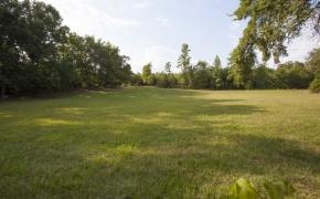 Guildford Horse Farm Field 1
