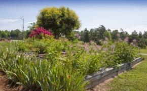 Pleasant Garden Farm 24