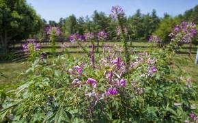 Pleasant Garden Farm 27
