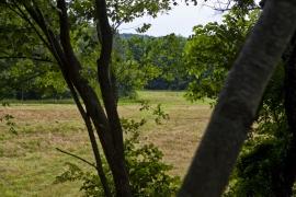 fieldview1