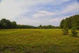 fieldview2