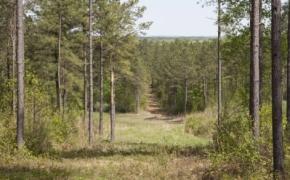 reno-sharpe-store-road-238-acres-21