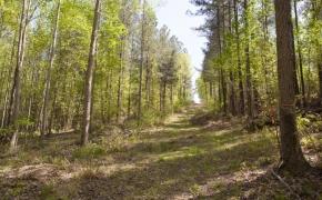 reno-sharpe-store-road-238-acres-23